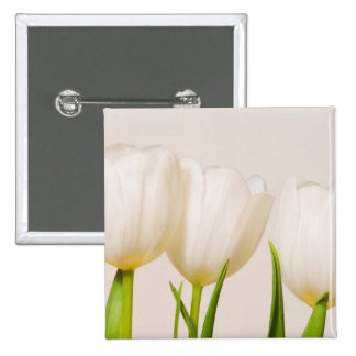 White tulips against a white background, pin