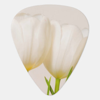 White tulips against a white background, plectrum