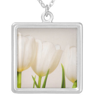 White tulips against a white background, silver plated necklace