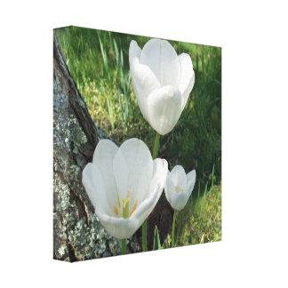 White Tulips Flower Trio Canvas Print