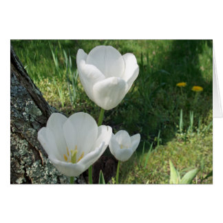 White Tulips Flower Trio Card