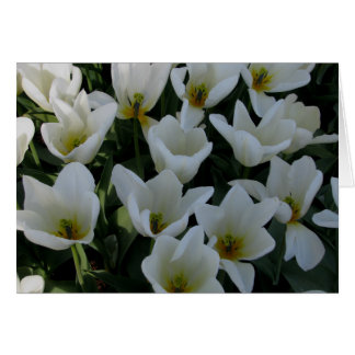 White Tulips Note Card