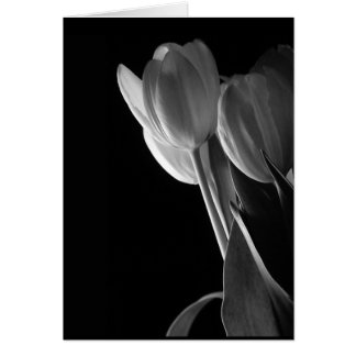 White Tulips Photo On Black Background Greeting Card