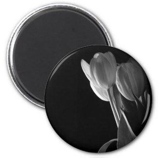 White Tulips Photo On Black Background Fridge Magnets