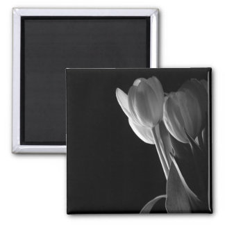 White Tulips Photo On Black Background Square Magnet