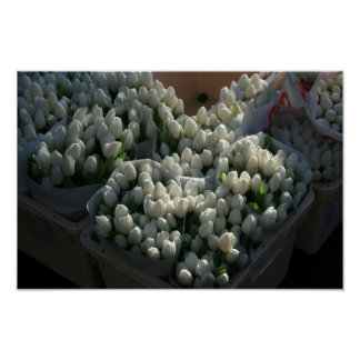 White Tulips Print