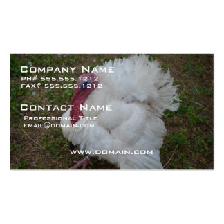White Turkey Pack Of Standard Business Cards
