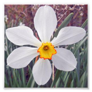 White Variation Photographic Print