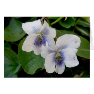 White Violet Pair Note Card