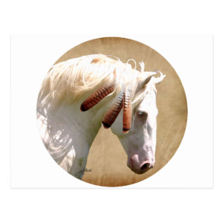 White War Horse Postcard