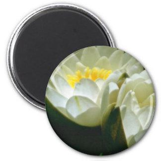 White Water Lilies flowers Fridge Magnet