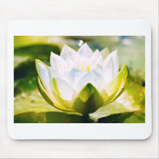 White Water Lilly Mouse Pad
