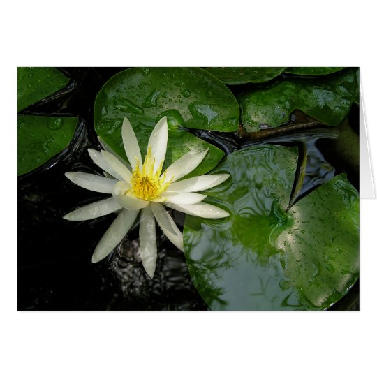 White Water Lily Card