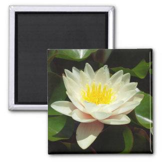 White Water Lily Flower Fridge Magnet