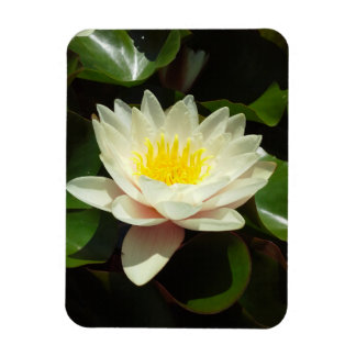White Water Lily Flower Magnet