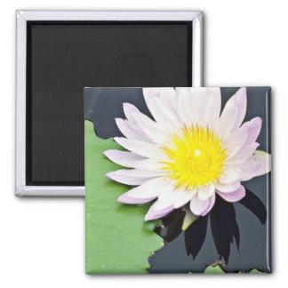 White water lily  flowers fridge magnet