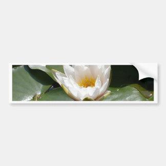 White Water Lily Lotus Flower Bumper Sticker