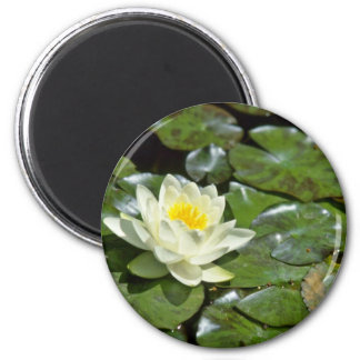 White Water Lily On Pads flowers Refrigerator Magnets