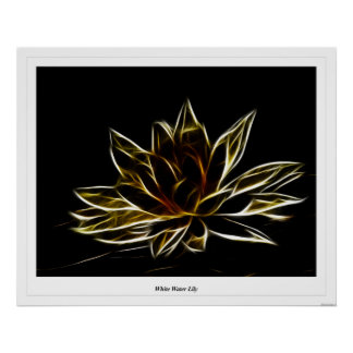 White Water Lily Print