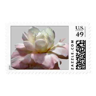 White Wedding Flowers Rose Postage Stamps