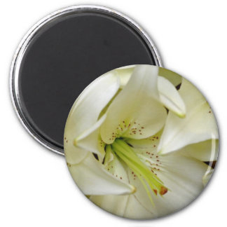 white White lilies flowers Magnet