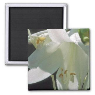 white White Lily flowers Fridge Magnet