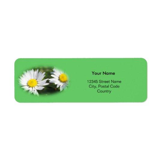 white wild daisy flowers
