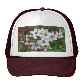 White Wildflower & Bee Fly Cap