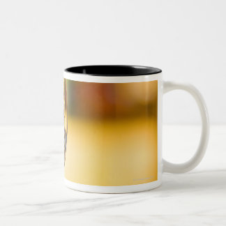 White wine is poured from bottle in restaurant. Two-Tone mug