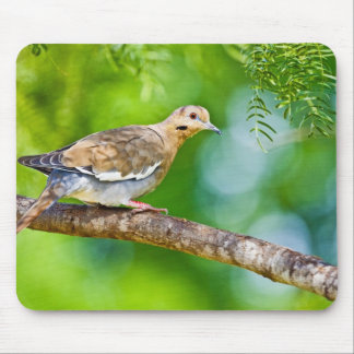 White-winged Dove Zenaida asiatica) adult, Mouse Mat