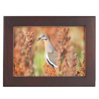 White-Winged Dove (Zenaida Asiatica) Perched Keepsake Box