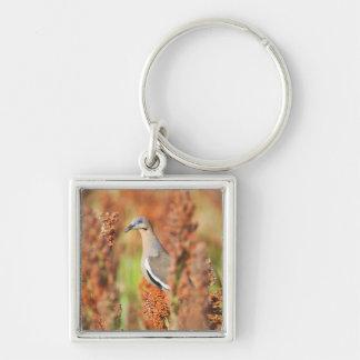 White-Winged Dove (Zenaida Asiatica) Perched Silver-Colored Square Key Ring