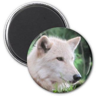 White Wolf Face Fridge Magnets