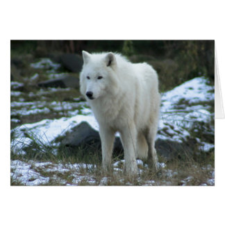 White Wolf in Winter Greeting Card