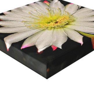 White/Yellow Cactus Flower Wall Canvas