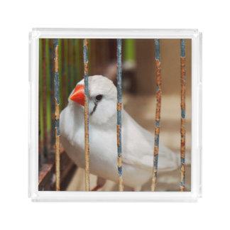 White Zebra Finch Bird in Cage Acrylic Tray