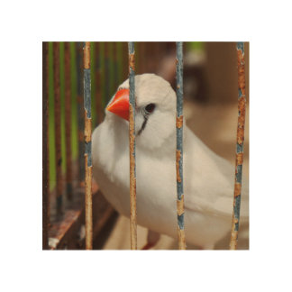 White Zebra Finch Bird in Cage Wood Canvases
