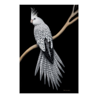 Whitefaced Pearl Pied Cockatiel Poster