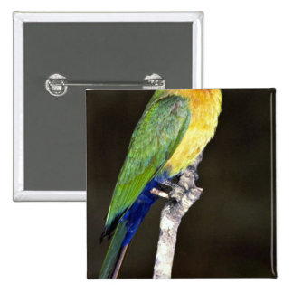 Whitefronted Bee-Eater Button