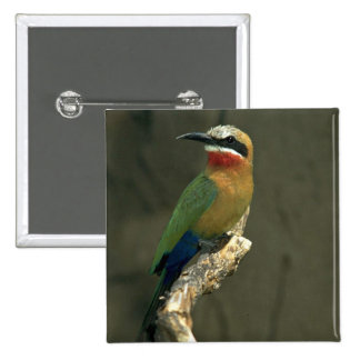 Whitefronted Bee-Eater Pinback Button