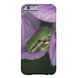 White's tree-frog barely there iPhone 6 case