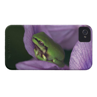 White's tree-frog iPhone 4 cover