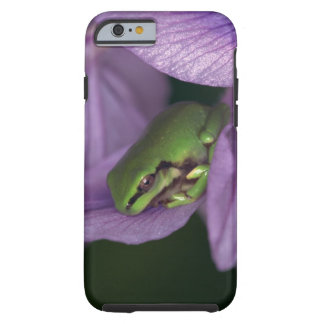 White's tree-frog tough iPhone 6 case