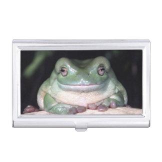 White's Treefrog, Litoria caerulea, Native to Business Card Holder