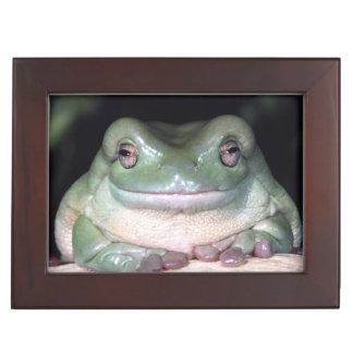 White's Treefrog, Litoria caerulea, Native to Memory Boxes