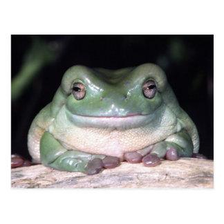 White's Treefrog, Litoria caerulea, Native to Postcard