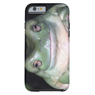 White's Treefrog, Litoria caerulea, Native to Tough iPhone 6 Case