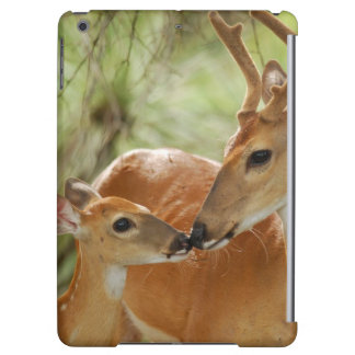 Whitetail Buck And Fawn Bonding