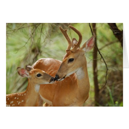 Whitetail Buck And Fawn Bonding Greeting Cards