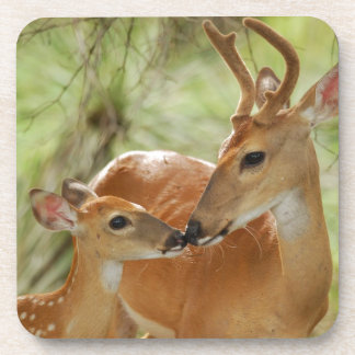 Whitetail Buck And Fawn Bonding Coaster